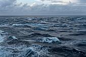 Waves break on the reef next to the Garuae Passage as the passenger cargo ship Aranui 5 (Aranui Cruises) enters the atoll, Fakarava Atoll, Tuamotu Islands, French Polynesia, South Pacific