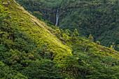 A waterfall tumbles down a mountainside amid lush jungle vegetation, near Taipivai, Nuku Hiva, Marquesas Islands, French Polynesia, South Pacific