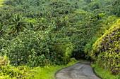 Road leads through lush jungle vegetation, near Taipivai, Nuku Hiva, Marquesas Islands, French Polynesia, South Pacific