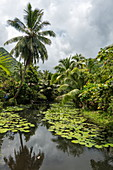 Water lilies in pond and coconut trees amid lush vegetation, Teahupoo, Tahiti, Windward Islands, French Polynesia, South Pacific