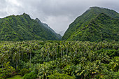 Aerial view of coconut trees, lush jungle and mountains on the southwest coast of Tahiti-Iti, Pointe Puforatiai, Tahiti, Windward Islands, French Polynesia, South Pacific