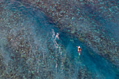 Aerial view of surfers waiting for wave on reef, Nuuroa, Tahiti, Windward Islands, French Polynesia, South Pacific