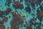 Aerial view of people on SUP stand up paddling boards amidst corals in the lagoon, near Papeete, Tahiti, Windward Islands, French Polynesia, South Pacific