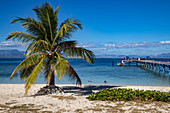 Coconut palm on the beach and pier at Malamala Island Beach Club, Mala Mala Island, Mamanuca Group, Fiji Islands, South Pacific