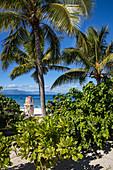 Coconut trees along the beach and SUP stand up paddle boards at Malamala Island Beach Club, Mala Mala Island, Mamanuca Group, Fiji Islands, South Pacific