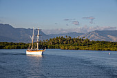Excursion sailboat returns to Port Denarau Marina in the late afternoon with mangroves, palm trees and lush vegetation with mountains behind, Port Denarau, near Nadi, Viti Levu, Fiji Islands, South Pacific
