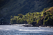 Coconut trees and rocky coast, Wayaseva Island, Yasawa Group, Fiji Islands, South Pacific