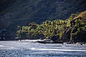Coconut palms and rocky coast, Wayaseva Island, Yasawa Group, Fiji Islands, South Pacific