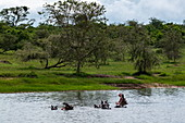A group of hippos in Lake Rwanyakazinga as seen from a boat trip operated by the luxury resort tented Magashi Camp (Wilderness Safaris), Akagera National Park, Eastern Province, Rwanda, Africa