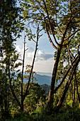 Blick auf Bäume und Berge, Nyungwe Forest National Park, Western Province, Ruanda, Afrika
