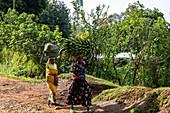 Two women carrying basket and heavy banana tree on their heads, near Gisakura, Western Province, Rwanda, Africa