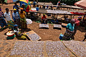 Women dry sambaza fish caught by singing fishermen on Lake Kivu at a roadside market, near Kagano, Western Province, Rwanda, Africa