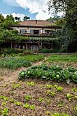 Vegetables are grown in the garden of the Kivu Paradis Hotel Resort on the banks of Lake Kivu, Nyamyumba, Western Province, Rwanda, Africa