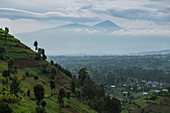 Trees on hillside with volcanic peaks in the distance, near Kinyababa, Northern Province, Rwanda, Africa