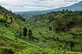 Üppige Landschaft, nahe Kinyababa, Northern Province, Ruanda, Afrika
