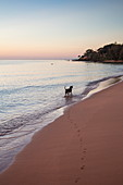 Dog by the water and paw prints in the sand at Ong Lang Beach at sunset, Ong Lang, Phu Quoc Island, Kien Giang, Vietnam, Asia