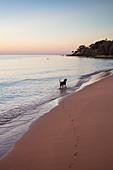Hund am Wasser und Pfotenabdrücke im Sand am Ong Lang Beach bei Sonnenuntergang, Ong Lang, Insel Phu Quoc, Kien Giang, Vietnam, Asien