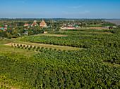 Aerial view of banana plantation and Buddhist temple, Oknha Tey Island, Mekong River, near Phnom Penh, Cambodia, Asia