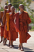 A group of Buddhist monks from the Vipassana Dhura Mandala Meditation Center on the way to Udong Pagoda, Oudong (Udong), Kampong Speu, Cambodia, Asia