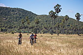 Fahrradausflug durch Reisfelder für Gäste von Flusskreuzfahrtschiff, nahe Andong Russei, Kampong Chhnang, Kambodscha, Asien