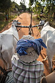 Excursion with ox cart for guests of the river cruise ship, Kampong Tralach, Kampong Chhnang, Cambodia, Asia
