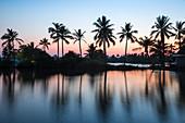 Palm trees reflecting in backwaters, Munroe Island, Kollam, Kerala, India, Asia