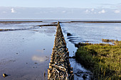 Polder in the mudflats, dike protection, silt, North Sea, ebb tide, grass, Wadden Sea, Bensersiel, East Frisia, Lower Saxony, Germany
