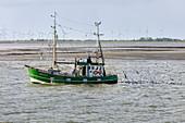 Fishing boat catching, fishing trawler, seagulls, North Sea, Langeoog, East Frisia, Lower Saxony, Germany