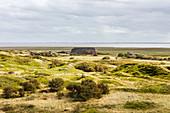 Inner island landscape of Langeoog, dunes, dune grass, house, Wadden Sea, North Sea, Langeoog, East Frisia, Lower Saxony, Germany