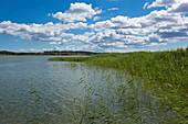 Balmer See, Achterwasser near Balm, Usedom, Baltic Sea, Mecklenburg-Western Pomerania, Germany