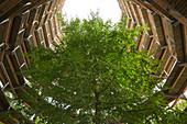 Treetop path in the natural heritage center Rügen, Ruegen, Baltic Sea, Mecklenburg-Western Pomerania, Germany