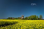 Blühendes Rapsfeld und Stumpenser Mühle in Horumersiel, Wangerland, Friesland, Niedersachsen, Deutschland, Europa