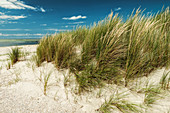 Sand dune and dune grass on the North Sea under a blue sky, Spiekeroog, East Frisia, Lower Saxony, Germany, Europe