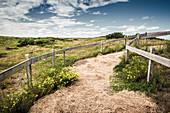 Pfad durch blühende Dünenlandschaft unter blauem Himmel mit Wolken, Spiekeroog, Ostfriesland, Niedersachsen, Deutschland, Europa