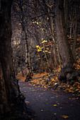 Path in the Bodetal, Thale, Harz, Saxony-Anhalt, Germany, Europe