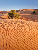 Dunes, desert, Dubai, United Arab Emirates