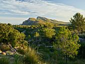 Puig de sa Creu, Talaia Freda, Parc natural de la península de Llevant, Mallorca, Balearic Islands, Catalonia, Spain