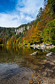Autumn forest with reflection, Feldsee, Feldberg, Black Forest, Baden-Württemberg, Germany