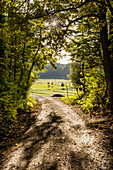 Forest path, exit, trees, forest, Rimsting, Bavaria, Germany