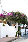 Straße mit Restaurant und Bougainvillea in Capri, Italien