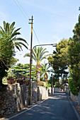 Kleine Straße umgeben von Palmen in Capri, Italien