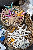 Nahaufnahme von getrockneten Seesternen in Capri, Italien