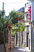 Small street with bougainville on the way to Arco Naturale in Capri, Italy