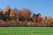 Autumnal landscape, Quebec, Canada