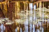Deife ria di, Teufel Quelle am Seehamer See, Bayern, Deutschland