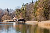 Südliche Ufer mit Schilf vom Seehamer See, Bayern, Deutschland