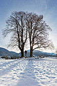 Trees in the backlight at the Wimmerkreuz in the glacier garden in Reit im Winkl in winter, Bavaria, Germany