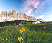 Wildflowers surrounding Glatsch Alm hut with the Odle in the background at sunset, Val di Funes, South Tyrol, Dolomites, Italy, Europe