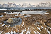 Dry grass covered by snow and ice and in background the snowy peaks at dawn, Djupvik, Lyngen Alps, Tromsø, Norway Europe