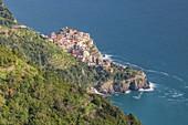 the vineyards of the Cinque Terre in late spring around Manarola, National Park of Cinque Terre, Unesco World Heritage Site, municipality of Riomaggiore, La Spezia province, Liguria district, Italy, Europe